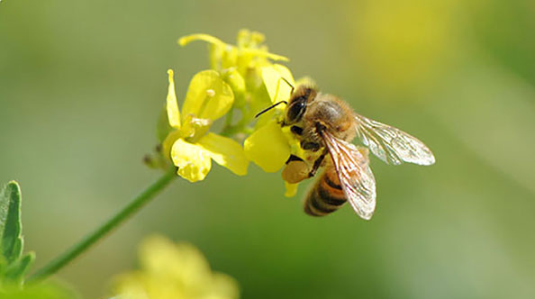 Sauvons les abeilles