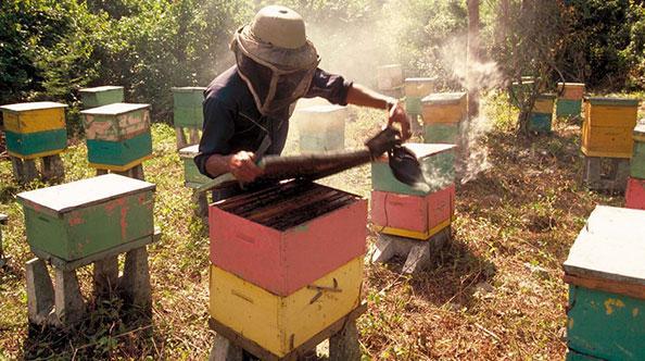 Des apiculteurs passionnés