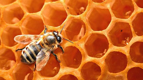 Du miel naturel et bio !