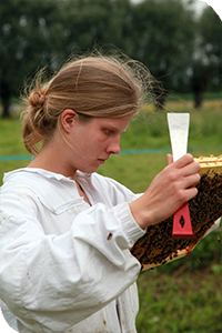 UTPLA apiculteur Justine HENNION