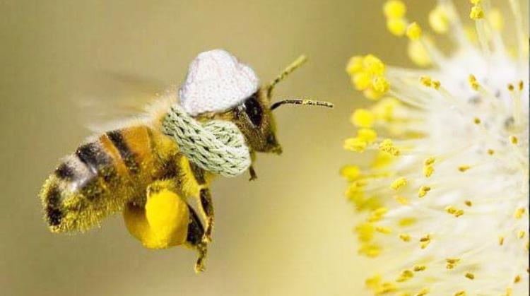 abeilles,partenariat,zolux,un toit pour les abeilles