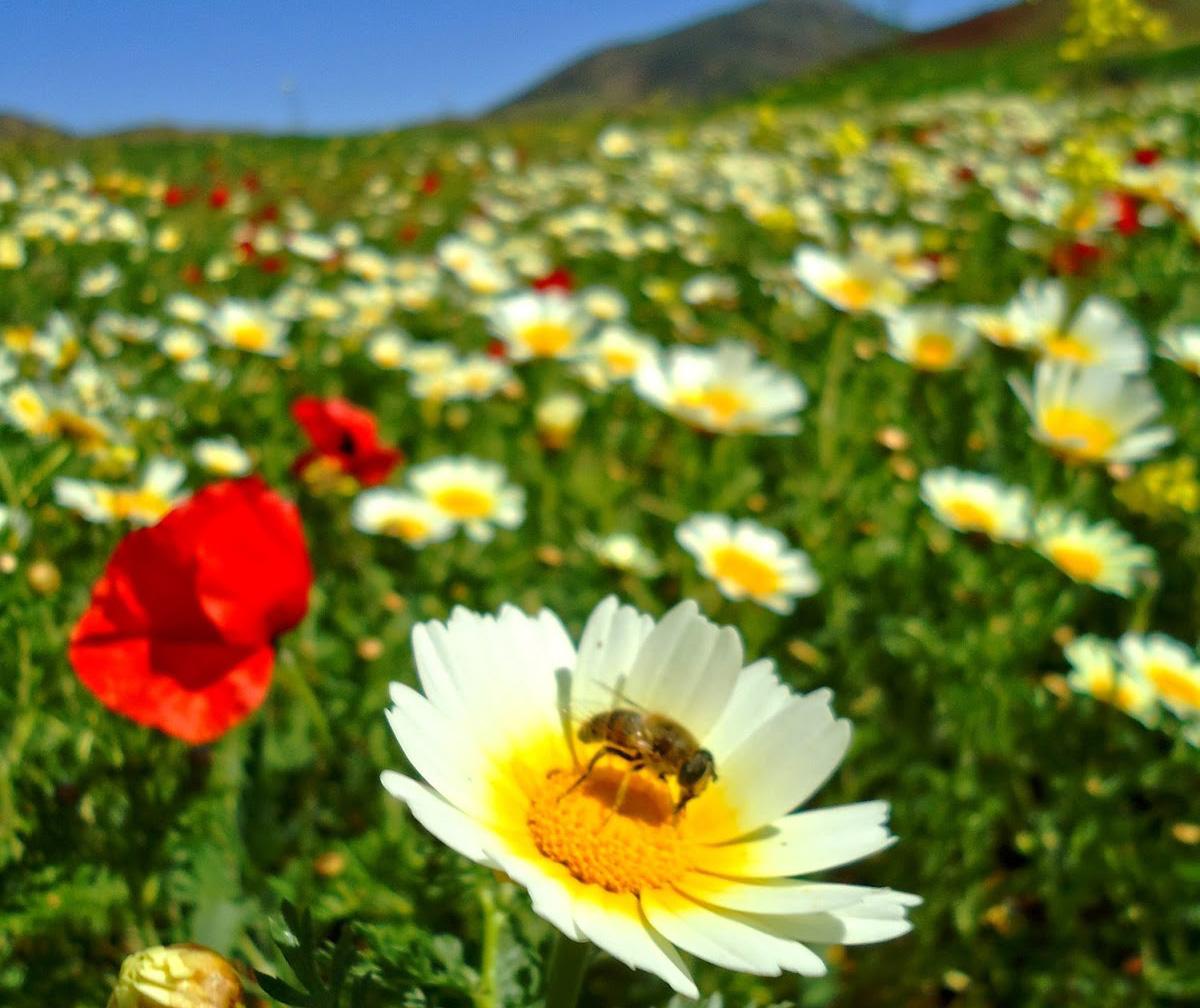 un blog pour les abeilles » actualités apicole