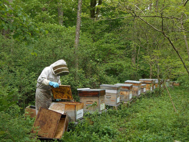 La ruche atlas parrain e - Les soldes hiver 2015 ...