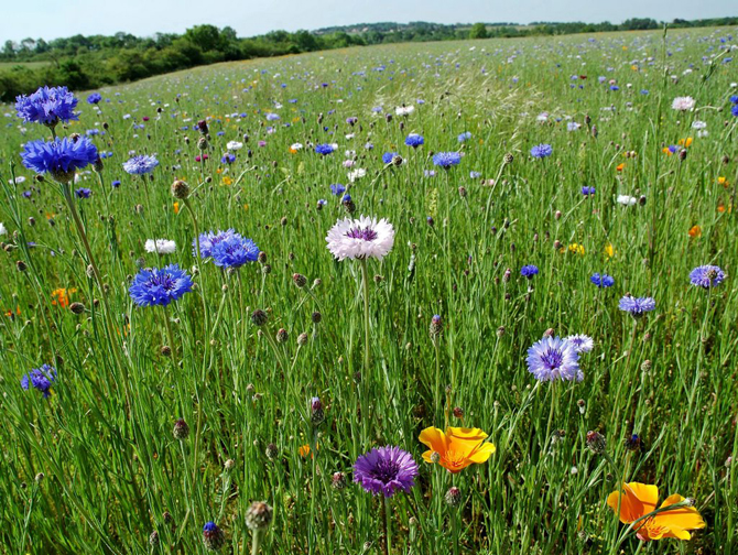 Parrainez des abeilles - Grossiste fleurs coupees pour particulier ...