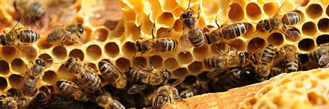 un toit pour les abeilles cr ation d 39 une nouvelle colonie d 39 abeilles. Black Bedroom Furniture Sets. Home Design Ideas