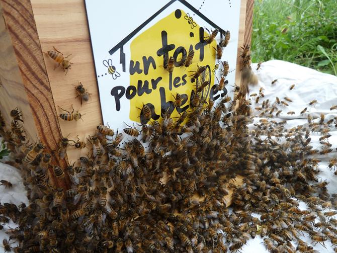 parrainer une ruche c 39 est agir pour la sauvegarde des abeilles. Black Bedroom Furniture Sets. Home Design Ideas