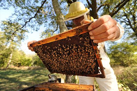 Des tonnes de miel