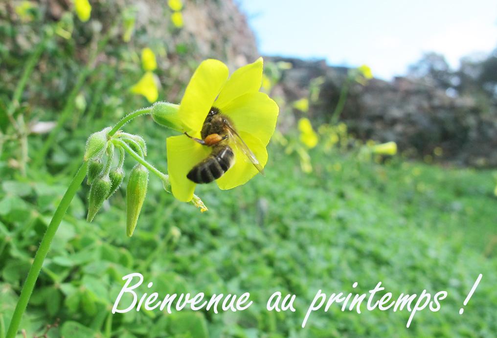 abeilles,un toit pour les abeilles,zolux,partenariat,ruche