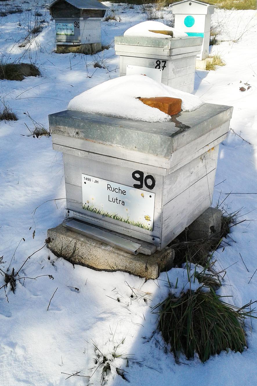 Nos ruches sous la neige par Jacques H.
