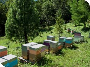 Le rucher de la Chartreuse
