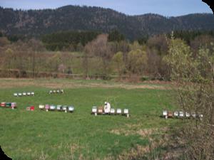 Le rucher de la Vallée du Rabodeau