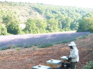 Le rucher des Gorges de Daluis