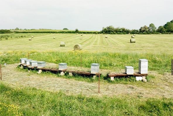 d76db17cc93c53 Parrainez des abeilles