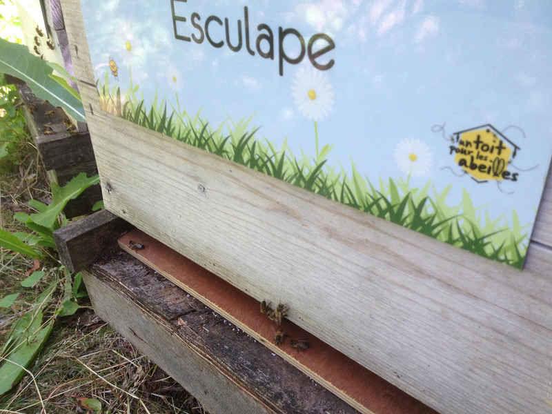 La ruche Esculape