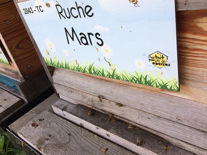 La ruche Mars