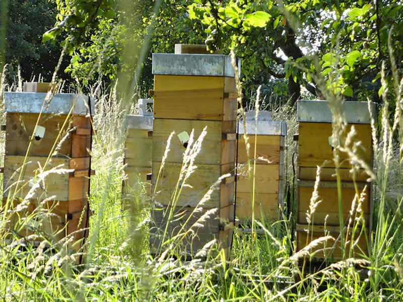 La ruche Phébus