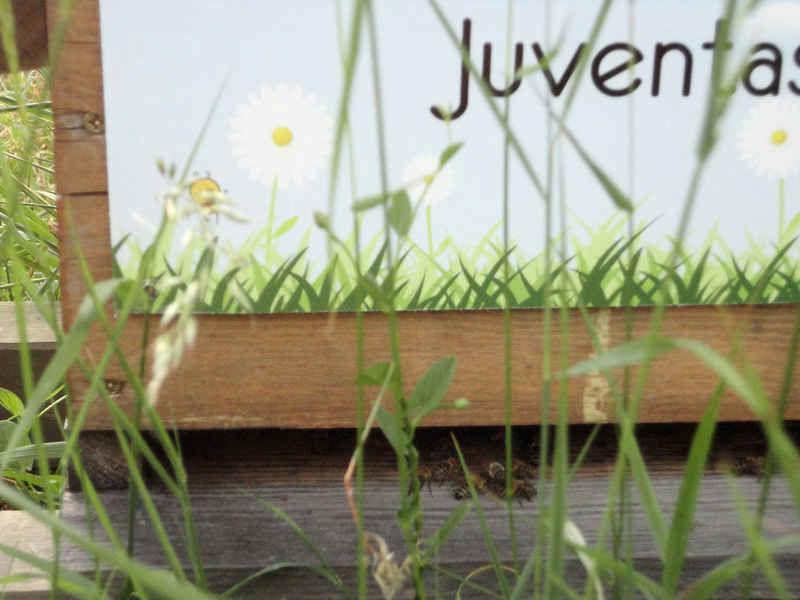 La ruche Juventas