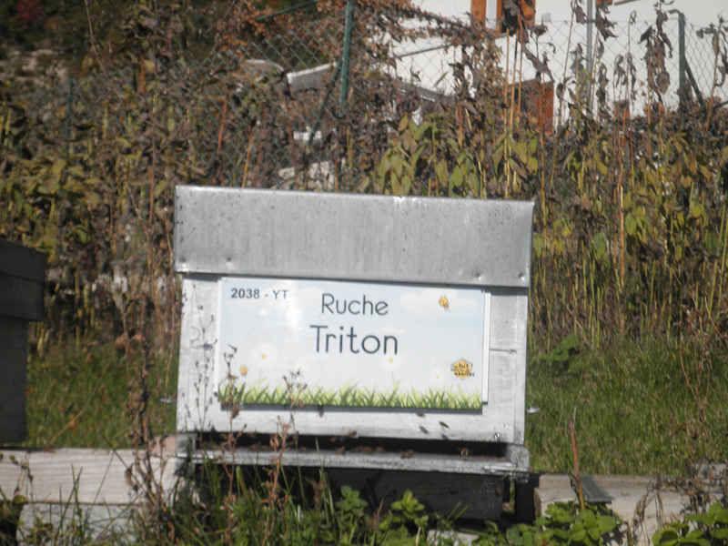La ruche Triton