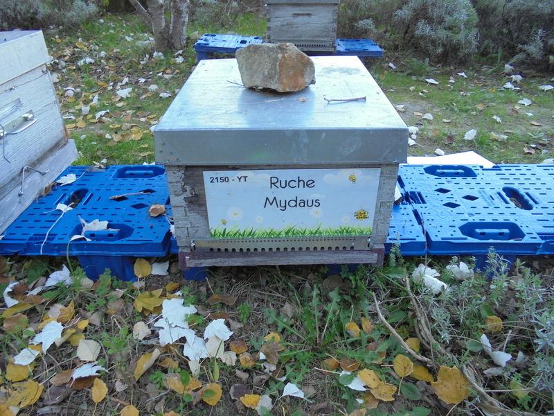 La ruche Mydaus