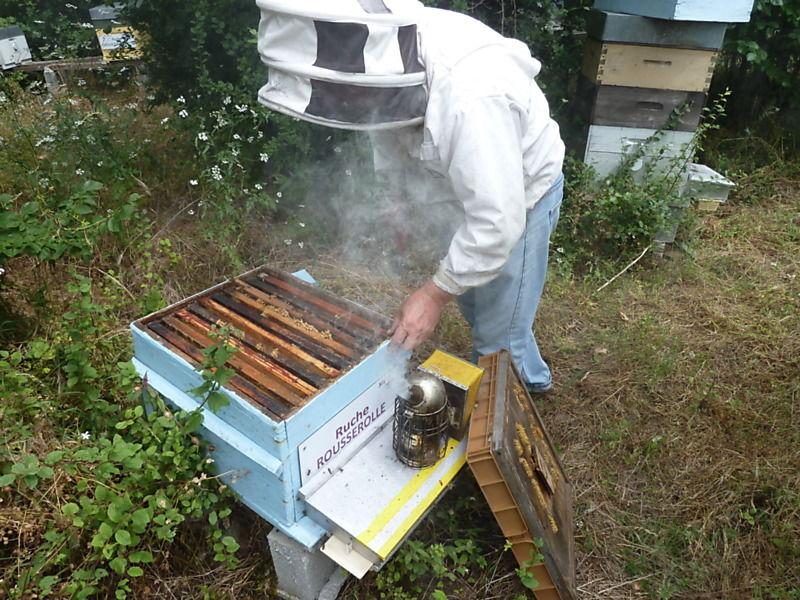 La ruche Rousserolle