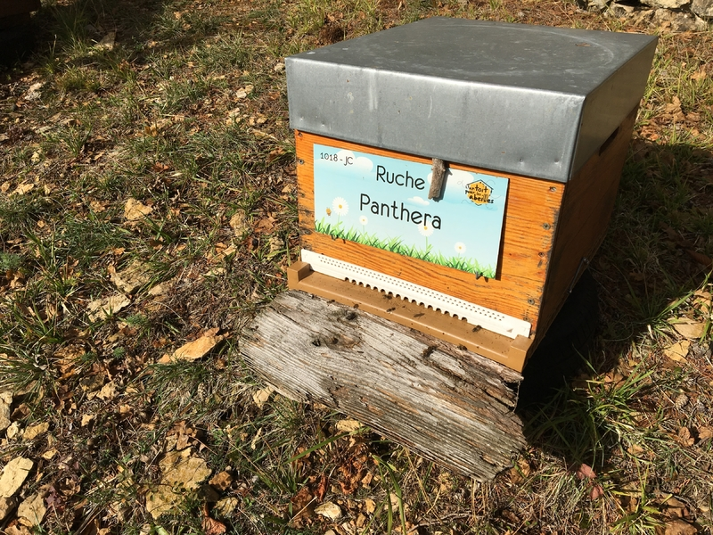 La ruche Panthera