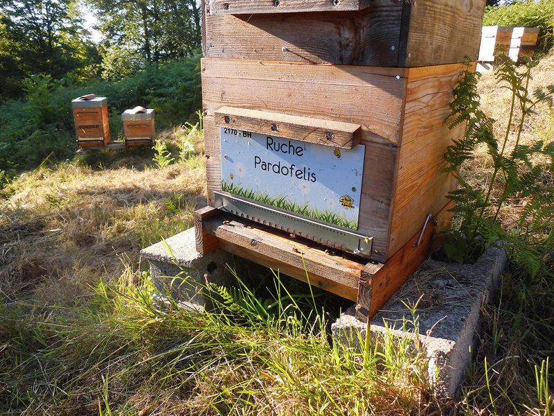 La ruche Pardofelis