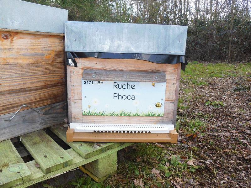 La ruche Phoca