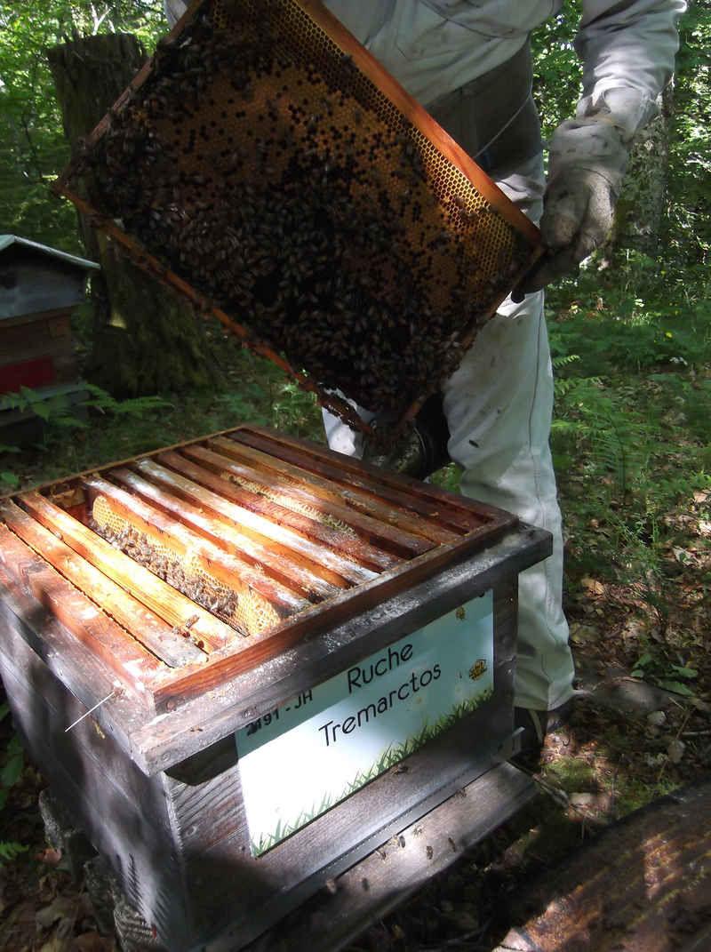 La ruche Tremarctos