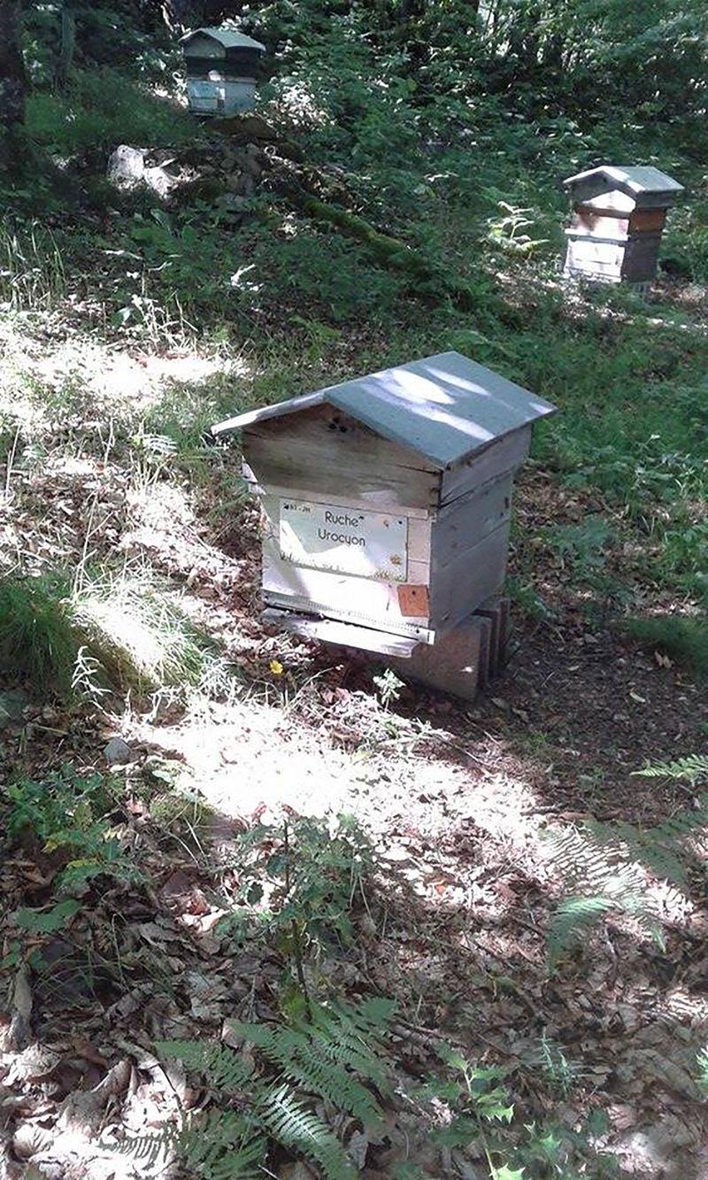 La ruche Urocyon