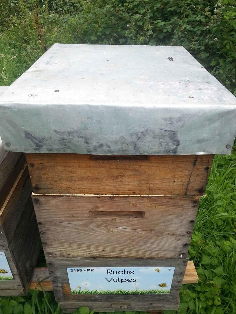 La ruche Vulpes