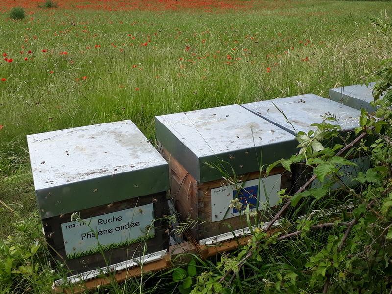 La ruche Association BOULES DE GOMME