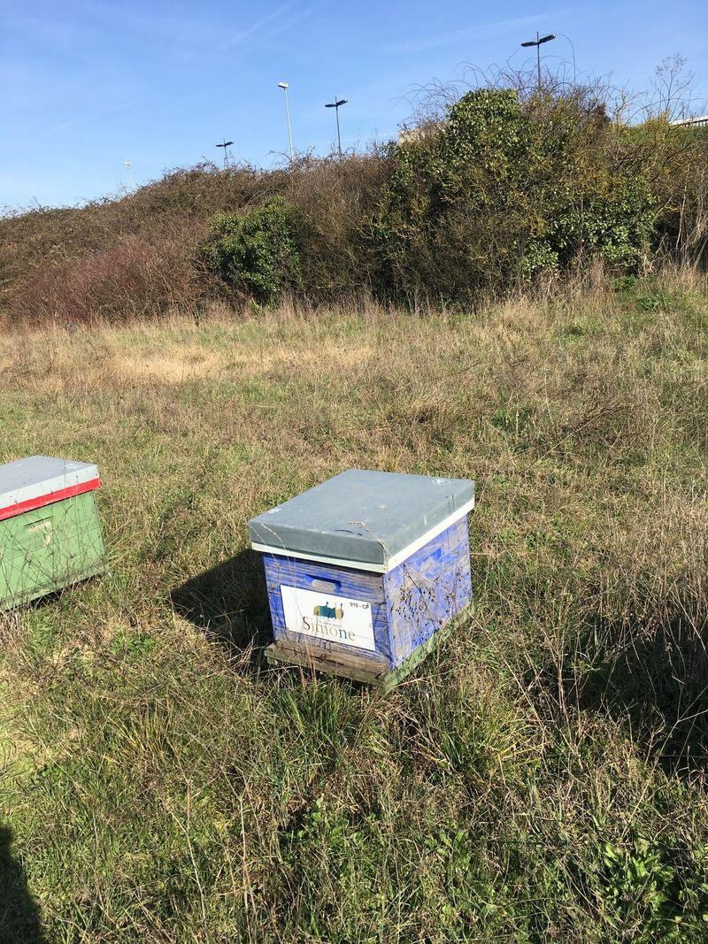 La ruche 123SIMONE