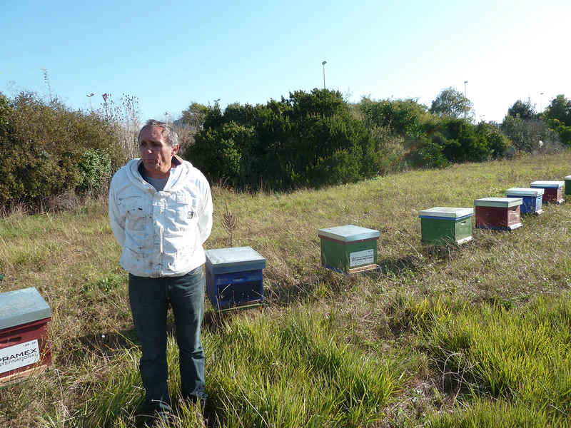 La ruche IMPRIMERIE ROCHELAISE