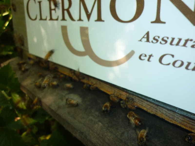 La ruche CLERMONT ASSURANCE ET COURTAGE