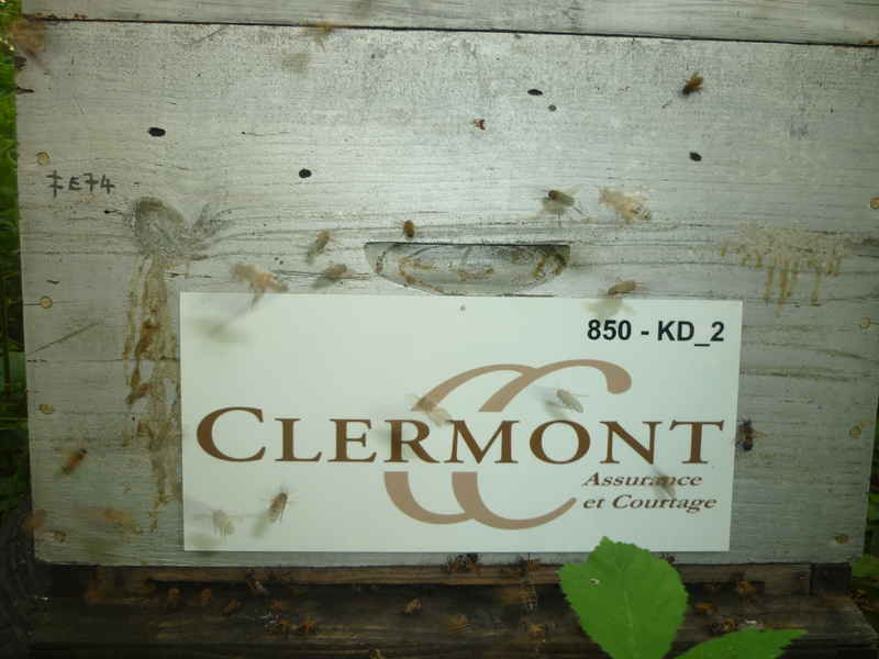 La ruche Clermont conseil