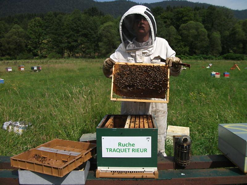 La ruche Traquet rieur