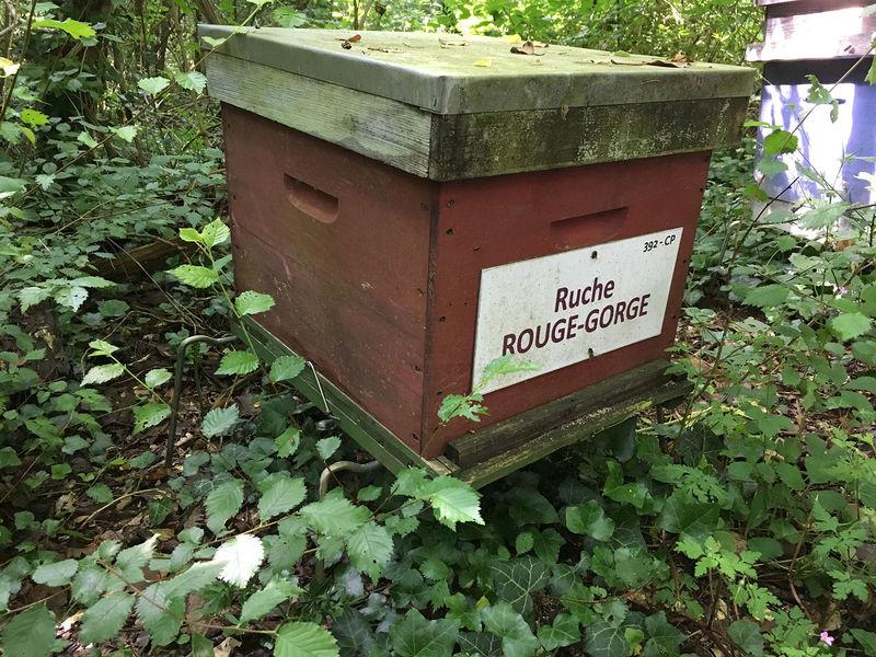 La ruche Rouge gorge