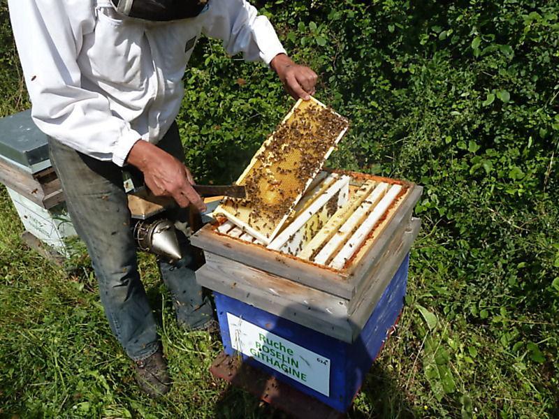 La ruche Roselin githagine