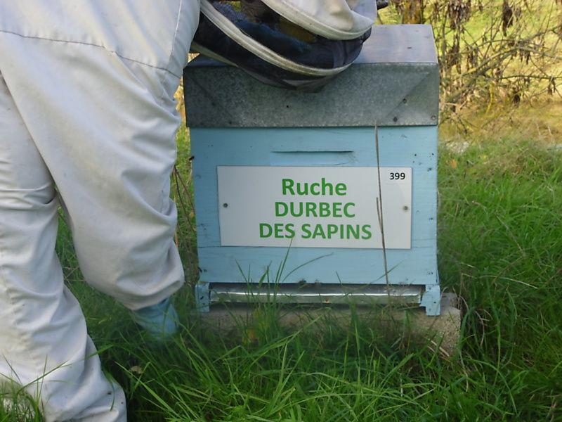 La ruche Durbec des sapins