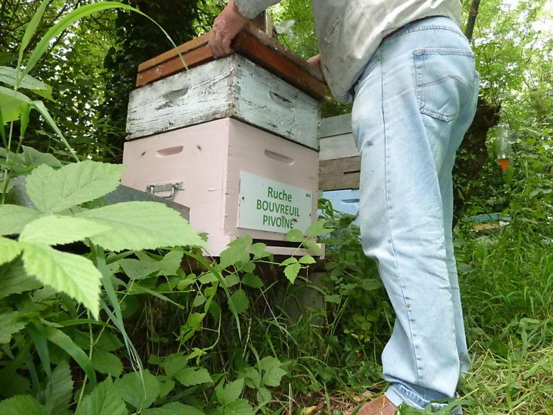 La ruche Bouvreuil pivoine