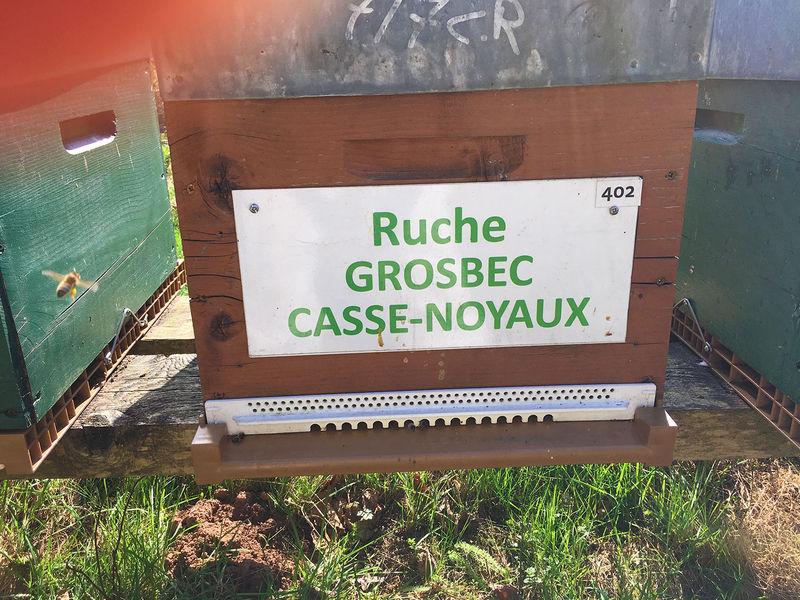 La ruche Grosbec casse-noyaux