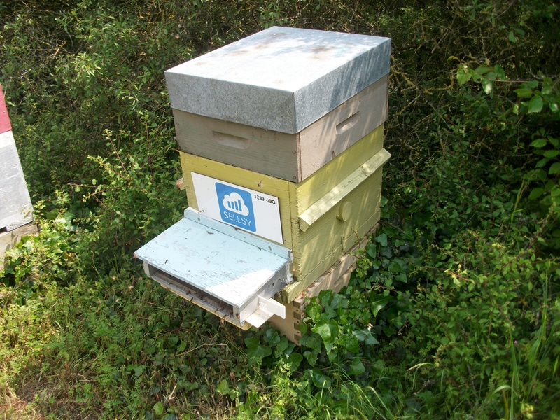 La ruche SELLSY
