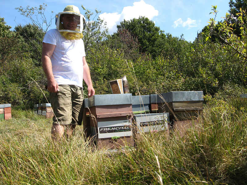 La ruche Francital environnement