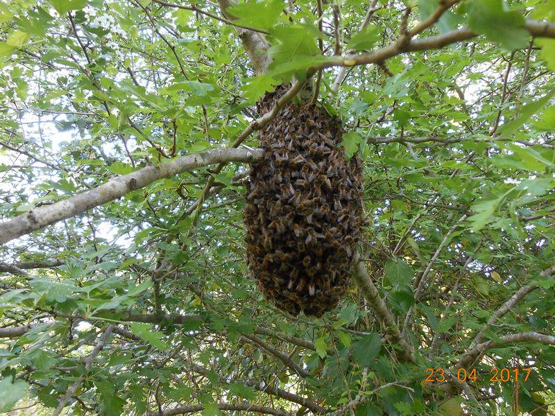 La ruche FRANCOIS PELLETIER - L