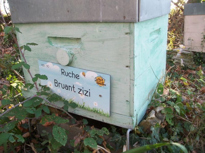 La ruche Bruant zizi