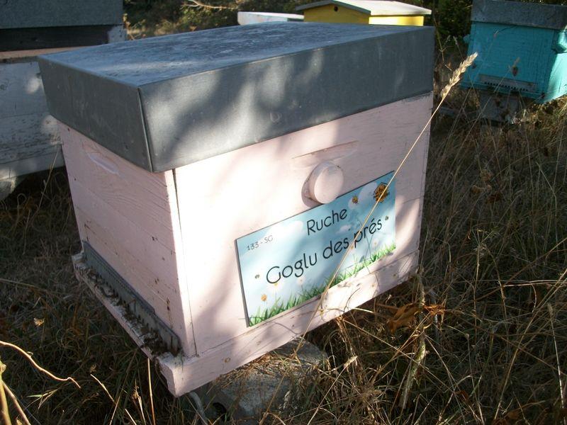La ruche Goglu des prés