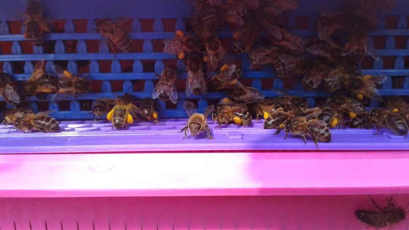 La ruche ABSIDE