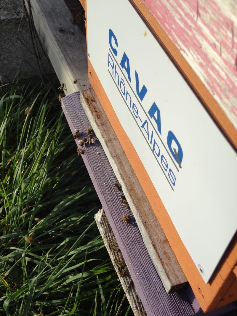 La ruche CAVAQ RHONE ALPES