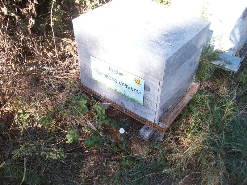 La ruche Bernache cravant