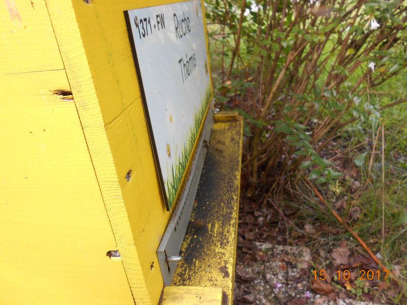 La ruche Thémis